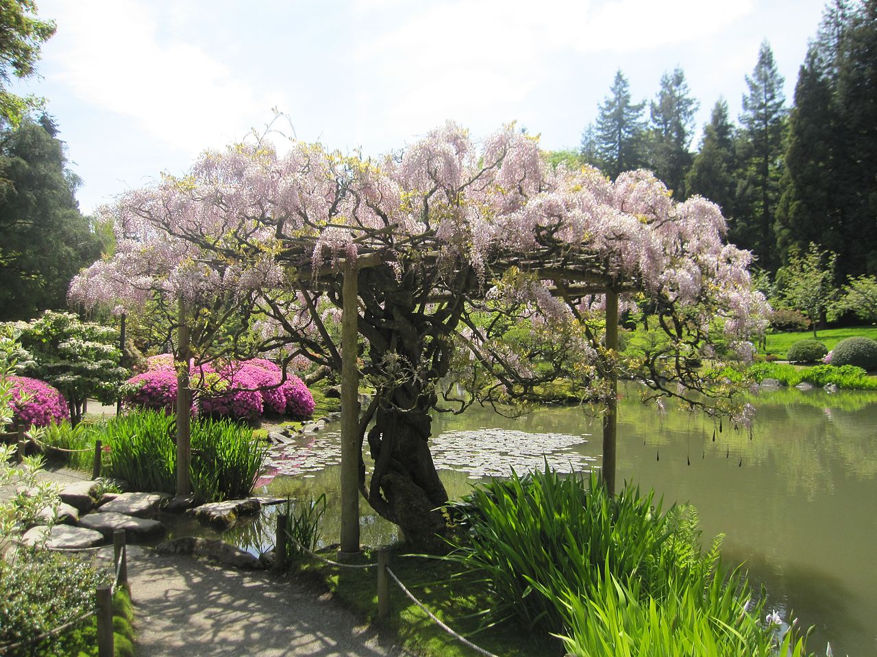 Japanese_garden_interesting_tree